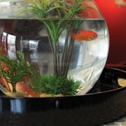 http://www.restolepoissonrouge.fr/wp-content/uploads/2015/10/Réservation Restaurant Le Poiss rouge Les Sables d'olonne vendee